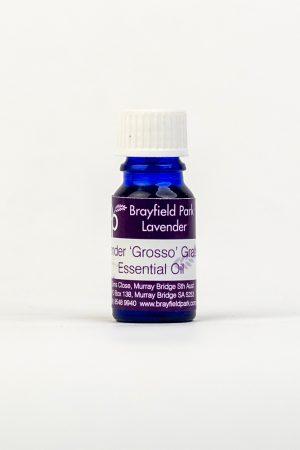 Lavender-'Grosso'-Essential-Oil